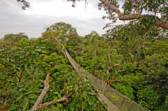 Rain Forest Canopy Suspension Trail Stock Photos