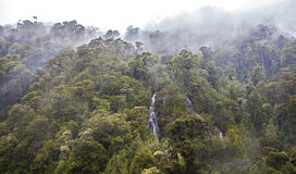 Rain forest, Carretera Australl, Chile. Deep forest in coloudy and rainy weather in Chile Royalty Free Stock Photography