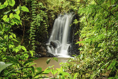 Rain Forest Clearing Royalty Free Stock Images