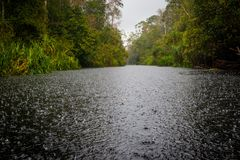 Rain in the forest. Cooling rain in Borneo forest Stock Photography