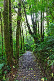 Rain Forest, Costa Rica Stock Photography