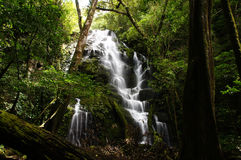 Rain Forest, Costa Rica Royalty Free Stock Photography