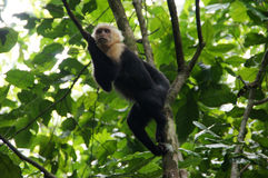Rain Forest, Costa Rica Royalty Free Stock Photo