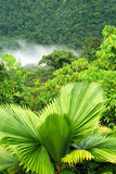 Rain forest in costa rica Stock Photos