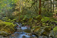 Rain forest and creek. Rain forest and Todd's creek in Sooke Potholes Provincial Park which is located on the banks of the spectacular Sooke River, BC, Canada Royalty Free Stock Photos
