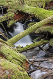 Rain forest creek water flow Royalty Free Stock Image