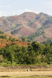 Rain forest destruction Stock Photography