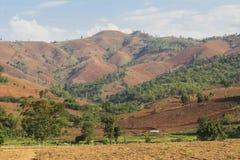 Rain forest destruction Stock Images