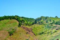 Rain forest destruction Royalty Free Stock Photo