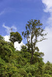 Rain Forest. Detail of the rain forest in Itatiaia National Park forest Royalty Free Stock Image