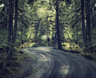 Rain Forest With A Dirt Road Stock Photography