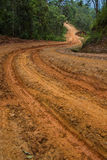 Rain Forest With A Dirt Road Royalty Free Stock Photography