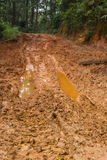 Rain Forest With A Dirt Road. At Northern of Thailand Stock Images