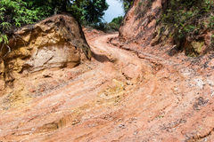 Rain Forest With A Dirt Road Stock Images