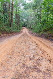 Rain Forest With A Dirt Road Royalty Free Stock Photo