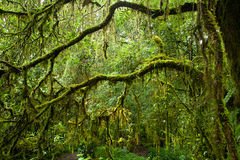 Rain forest. Royalty Free Stock Photo