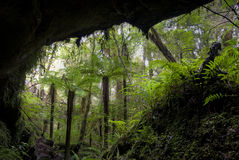 Fern trees in cave entrance, New Zealand Stock Photo