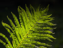 Rain forest ferns. Dark background royalty free stock photos
