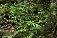 Rain forest floor plants Royalty Free Stock Photography