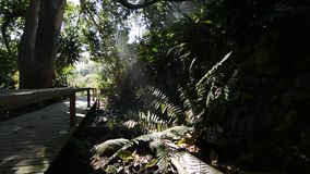 Rain forest floor stock video