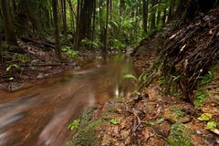Rain forest with flowing creek water Stock Image