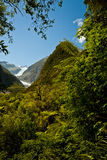 Rain forest and Fox Glacier - New Zealand Royalty Free Stock Images