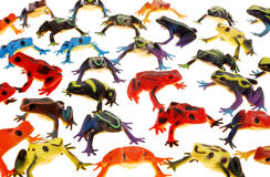 Rain forest frogs Royalty Free Stock Photos