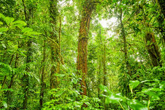 Rain forest green background Royalty Free Stock Image