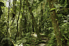 Rain forest green tropical amazon primary jungle  Royalty Free Stock Images
