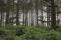 Rain in forest Stock Photos