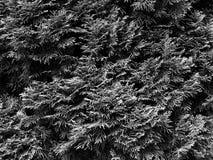Rain forest, greenery Stock Photos