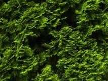 Rain forest, greenery Royalty Free Stock Photo