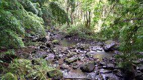 Rain Forest in Hawaii. Rain Forest Scene in Maui Hawaii stock video footage