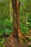 Rain forest - HDR photo Royalty Free Stock Photos