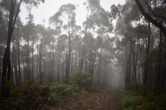 Rain Forest Hill path Stock Images