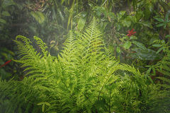 Rain in forest jungle Royalty Free Stock Photography