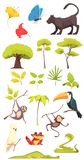 Rain Forest Jungle Set. Rain forest jungle inhabitants flora fauna insects collection with alligator cobra snake butterflies monkeys isolated vector illustration Stock Photos