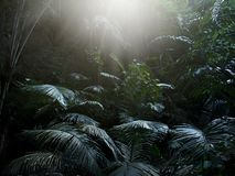 Rain forest at Krabi in Thailand Stock Image