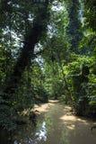 Rain forest at Krabi in Thailand Stock Photos