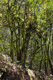 The  rain-forest in La Gomera, Canary, Spain Royalty Free Stock Images