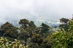 Rain forest landscape Stock Image