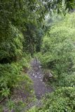 Rain Forest at Los Tilos . La Palma. Canary Islands. stock image