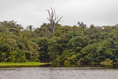 Rain Forest Manaus Stock Photos