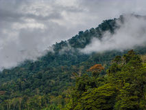 Rain forest in Manu National Park Stock Images