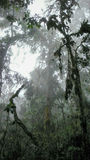 Rain forest in the mist Stock Image