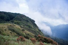 Rain forest mountain with cloud and fog. Rain forest mountain cover with white cloud and fog.  Summer time holiday trekking and hiking in Thailand at  Doi Innd Royalty Free Stock Images