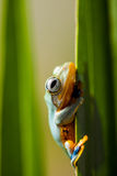 Rain forest, natural environment, exotic frog Royalty Free Stock Photo