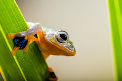 Rain forest, natural environment, exotic frog Royalty Free Stock Photos