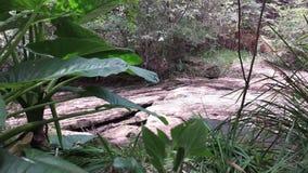 Rain forest sound stock footage