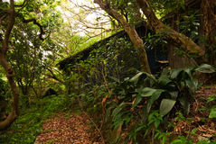 Rain forest with old destroyed house Stock Photos